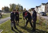Сквер «Дворцовый» украсят 50 елей, высаженных в память о погибших в ВОВ