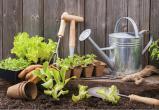 Товары для садоводства и огородничества включены в перечень непродовольственных товаров первой необходимости